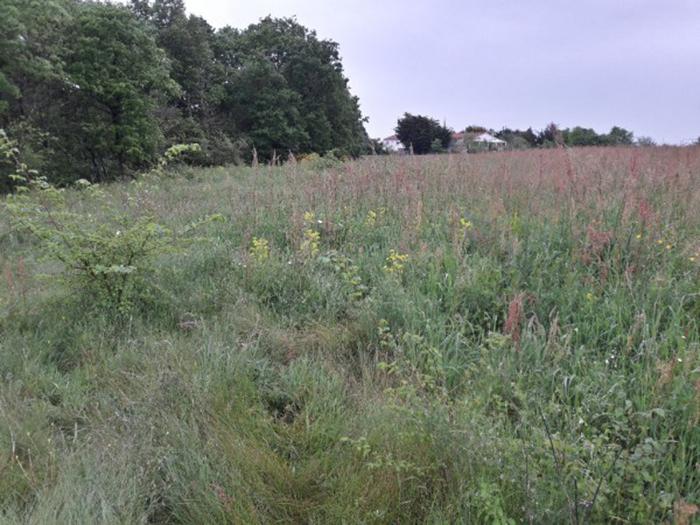 Terrain à bâtir près de Lairoux - Millet Immobilier